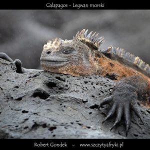 Zdjęcia z Ekwadoru i Galapagos